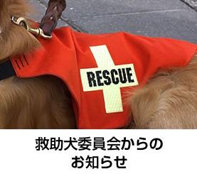 救助犬委員会からのお知らせ